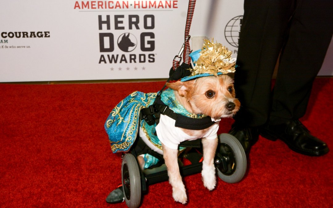 Not Your Usual Red Carpet -The 7th Annual HERO DOG Awards