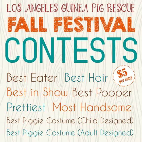 Los Angeles Guinea Pig Rescue Fall Festival Arrives Oct. 20
